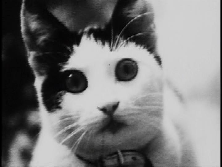 Кошка (1968)